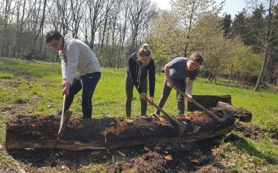 Renovierung eines Waldkindergartens